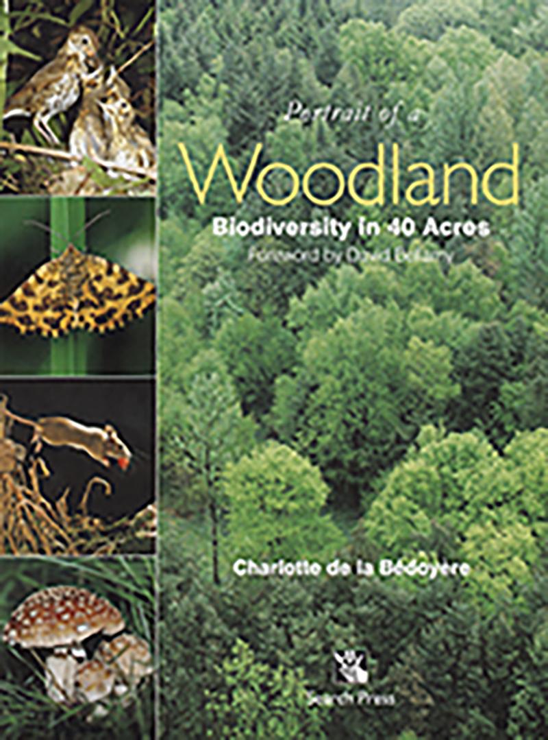 Portrait of a Woodland